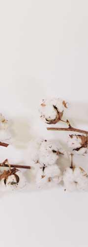 coton bio ernest et lulu pour mouchoirs en tissu