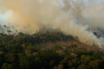 amazonia reveil florestania