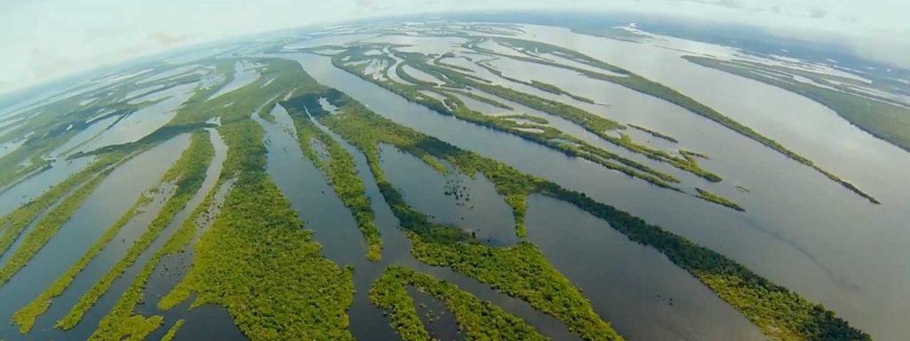 amazonie réveil de florestania