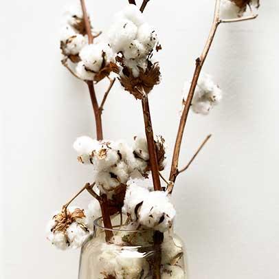 fabrication française et utilisation de coton biologique