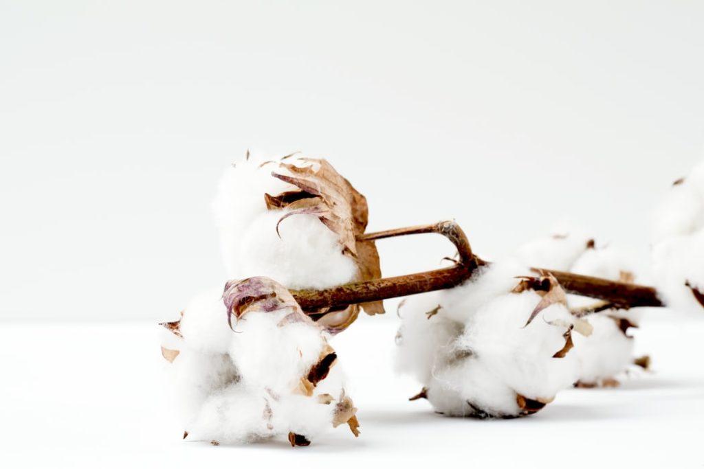 coton-bio-alernatif-choix